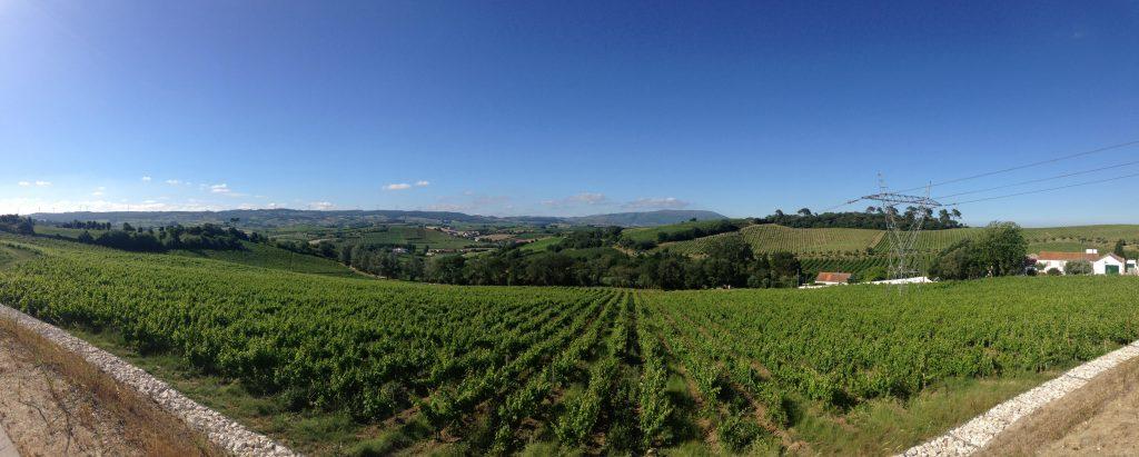 Chocapalha Vineyards